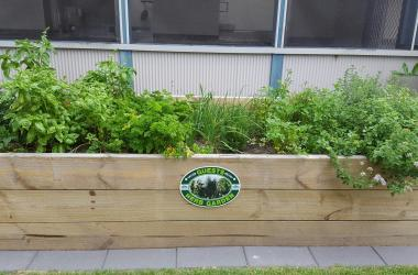 Image of Herb Garden